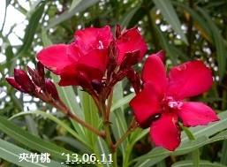 f:id:mikawakinta63:20130610220343j:image:left