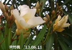 f:id:mikawakinta63:20130610220457j:image:left