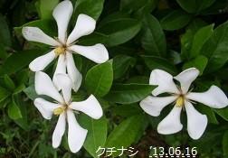 f:id:mikawakinta63:20130610220913j:image:left