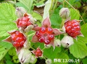 f:id:mikawakinta63:20130614142349j:image:left