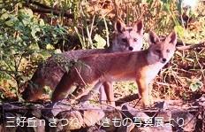 f:id:mikawakinta63:20130616032334j:image:right