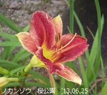 f:id:mikawakinta63:20130619214347j:image:right
