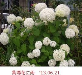 f:id:mikawakinta63:20130619215416j:image:left