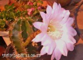 f:id:mikawakinta63:20130624085050j:image:left