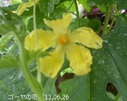f:id:mikawakinta63:20130626030026j:image:right