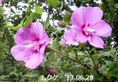 f:id:mikawakinta63:20130627202527j:image:right