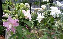 f:id:mikawakinta63:20130701231927j:image:right