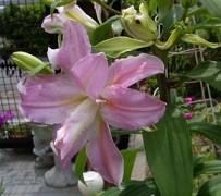 f:id:mikawakinta63:20130701231947j:image:left