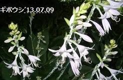 f:id:mikawakinta63:20130708194003j:image:left