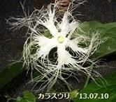 f:id:mikawakinta63:20130709184142j:image:left