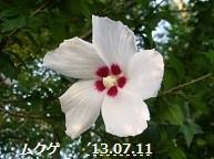 f:id:mikawakinta63:20130709191608j:image:left