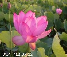 f:id:mikawakinta63:20130711184425j:image:left