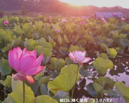 f:id:mikawakinta63:20130711184550j:image