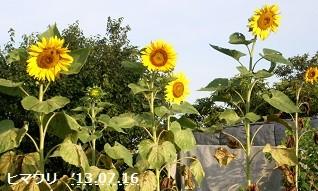 f:id:mikawakinta63:20130715191833j:image:left