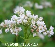f:id:mikawakinta63:20130716184231j:image:left