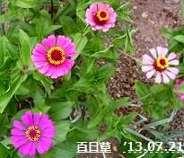 f:id:mikawakinta63:20130716191852j:image:right
