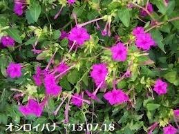 f:id:mikawakinta63:20130718110652j:image:right