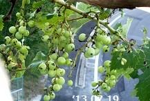 f:id:mikawakinta63:20130718195242j:image:right