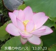 f:id:mikawakinta63:20130720230933j:image:left