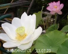 f:id:mikawakinta63:20130720231004j:image:right