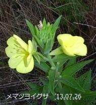 f:id:mikawakinta63:20130721185736j:image:left