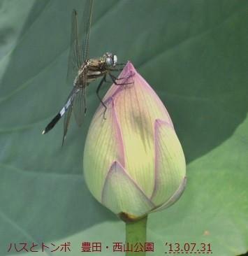 f:id:mikawakinta63:20130730234001j:image