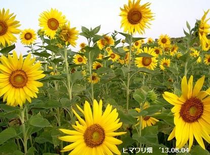 f:id:mikawakinta63:20130803191036j:image
