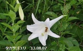 f:id:mikawakinta63:20130806185234j:image:right