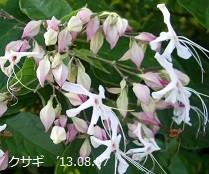 f:id:mikawakinta63:20130806185536j:image:left