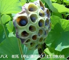 f:id:mikawakinta63:20130807232313j:image:right