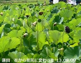 f:id:mikawakinta63:20130807232643j:image:left