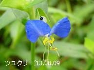 f:id:mikawakinta63:20130808190743j:image:right