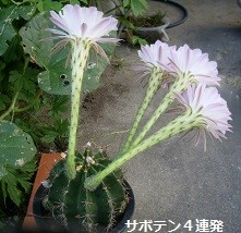 f:id:mikawakinta63:20130812192034j:image:right
