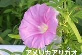 f:id:mikawakinta63:20130814192611j:image:left