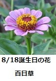 f:id:mikawakinta63:20130817194216j:image:right