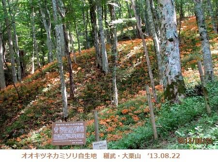 f:id:mikawakinta63:20130822093453j:image