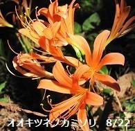 f:id:mikawakinta63:20130822093937j:image:left