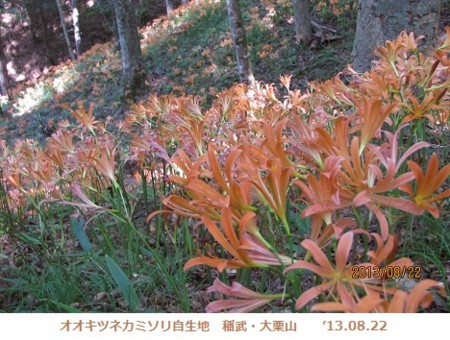 f:id:mikawakinta63:20130822094155j:image
