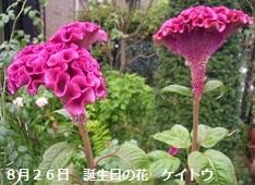 f:id:mikawakinta63:20130826024234j:image:right