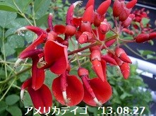 f:id:mikawakinta63:20130826024446j:image:right
