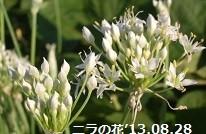 f:id:mikawakinta63:20130827194618j:image:right