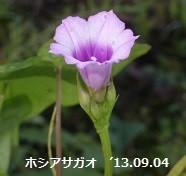 f:id:mikawakinta63:20130903193228j:image:left
