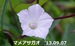 f:id:mikawakinta63:20130906192031j:image:left