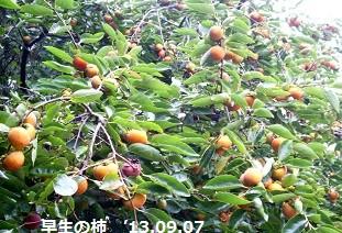f:id:mikawakinta63:20130906194527j:image:left