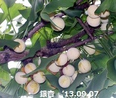 f:id:mikawakinta63:20130906233306j:image:right