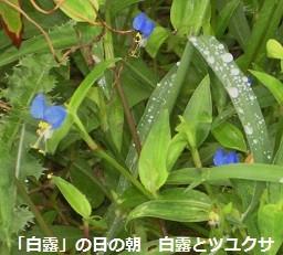 f:id:mikawakinta63:20130907201421j:image:right