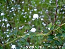 f:id:mikawakinta63:20130911052325j:image