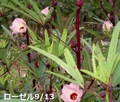 f:id:mikawakinta63:20130912192117j:image:left