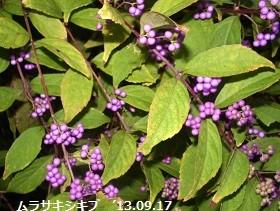 f:id:mikawakinta63:20130916190747j:image:left