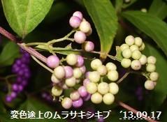 f:id:mikawakinta63:20130916190822j:image:right